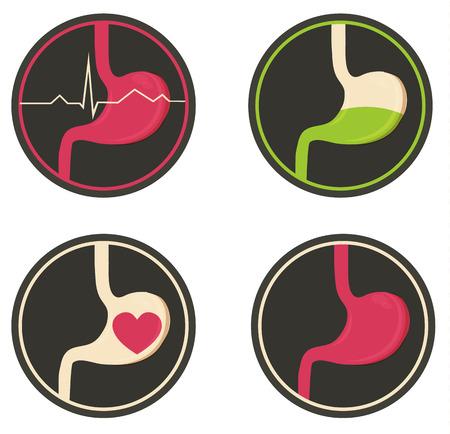 L'estomac humain, simple, illustration médicale, des couleurs vives