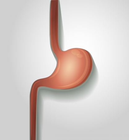 Human stomach, simple medical illustration, bright colors Vector