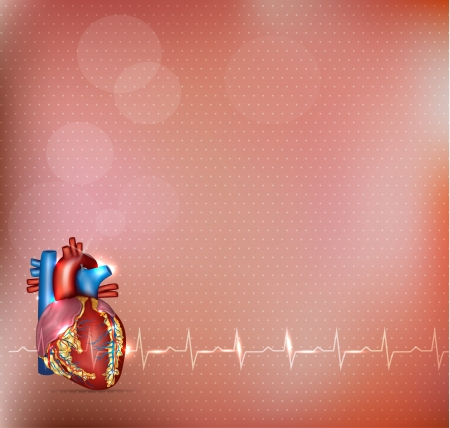 cardiogram: Human heart detailed anatomy and normal cardiogram, cardiology background. Medical illustration.