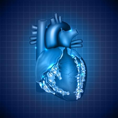 infarctus: C?ur humain illustration m�dicale, l'anatomie d�taill�e, la conception abstraite bleu