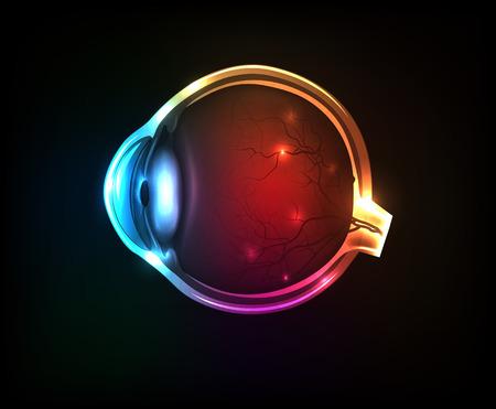 partes del cuerpo humano: Ojo humano colorido hermoso sobre un fondo oscuro.