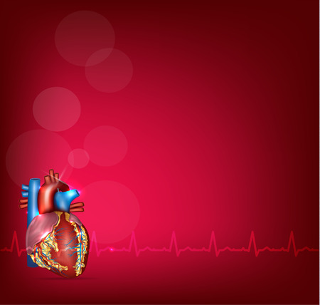Human heart anatomy on a bright red background and normal sinus rhythm.