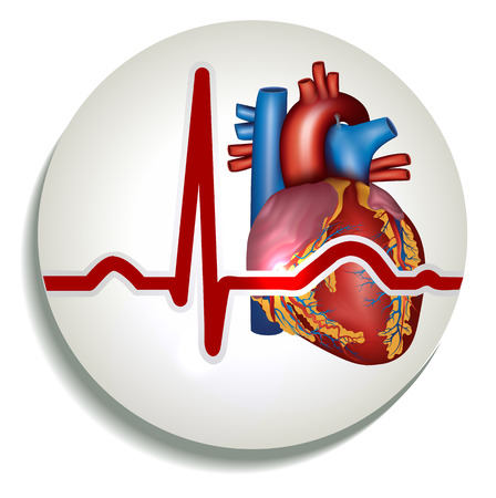 contraction: Colorful human heart rhythm icon. Human heart anatomy and normal sinus rhythm.