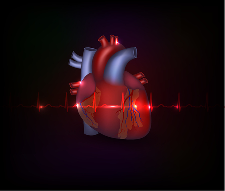 heart disease: Beautiful cardiology poster, heart illustration and normal cardiogram on a dark background
