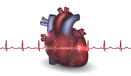 cardiovascular disease: Heart anatomy and cardiogram on a white background