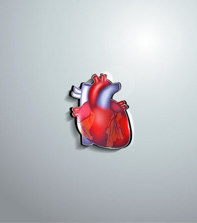 body blood: Human heart cut out of paper, beautiful colorful design