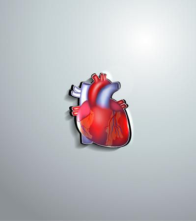 klatki piersiowej: Ludzkie serce wycięte z papieru, piękne kolorowe projektu Ilustracja
