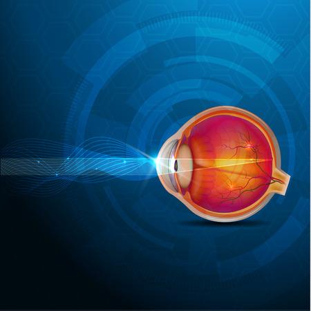 カラフルな目の解剖学、正常な視力の抽象的な青い図。