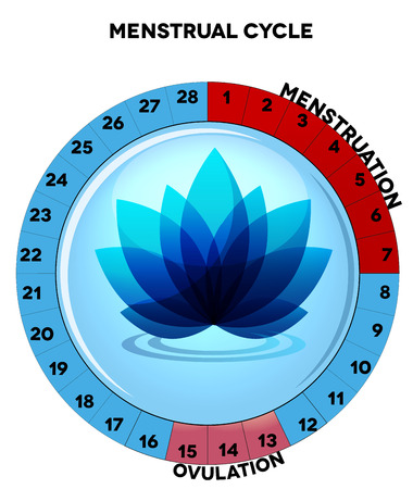 menstruation: Menstrual cycle chart, average twenty eight menstrual cycle days, menstruation and ovulation  Beautiful blue flower at the middle
