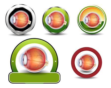 eye cross section: Ophthalmology symbols collection, Human eye cross section. Illustration