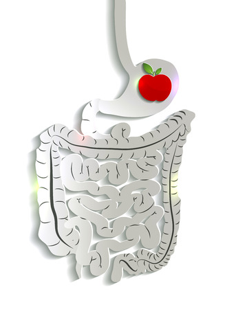 bowels: Human stomach and bowels, apple inside stomach. Simple medical illustration.