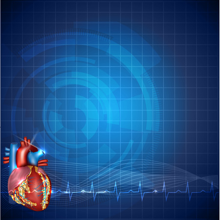 atherosclerosis: Cardiology technology background, detailed human heart anatomy and normal cardiogram rhythm, beautiful blue color design. Illustration