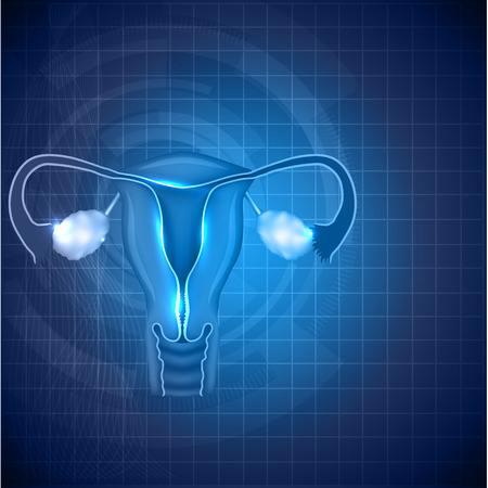 Female reproductive system background. Normal female uterus and ovaries illustration. Иллюстрация