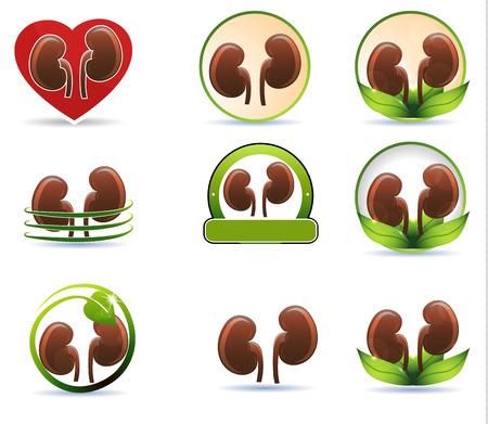 kidneys: Huge set of kidneys icons  Beautiful bright designs  Illustration