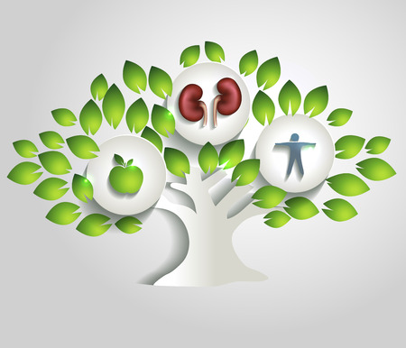 Los riñones y el árbol, estilo de vida saludable concepto de alimentos saludables; riñones sanos y humano sano
