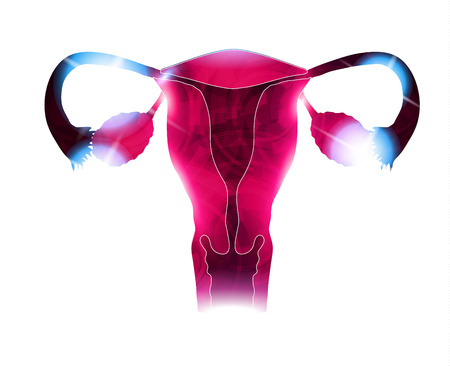 menstruation: Womb beautiful bright design. Reproductive organs, bright colors and light shades.