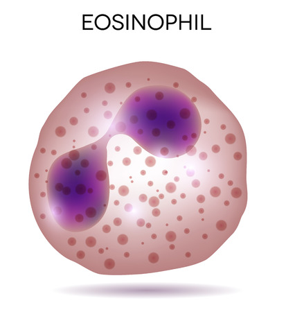 Human white blood cell Eosinophil Illustration