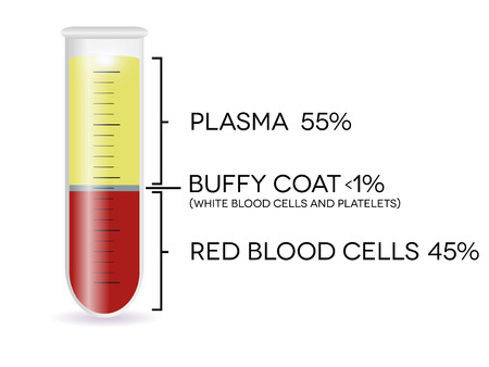 Test tube with blood cells, plasma, buffy coat and red blood cells. Иллюстрация