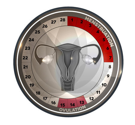 period: Menstrual cycle calendar, days of menstruation and ovulation. Female reproductive system anatomy at the middle, uterus and ovaries.