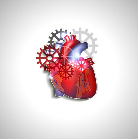 enfermedades del corazon: Corazón con engranajes, la anatomía del corazón humano Vectores