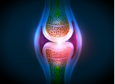 liquid x: Synovial joint anatomy abstract bright design. Healthy joint detailed illustration.
