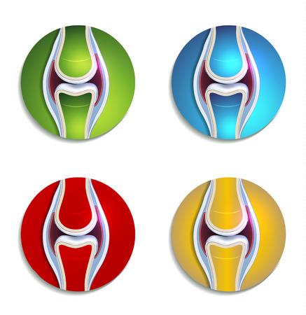 de rodillas: Iconos coloridos anatom�a conjunta abstracta establecen