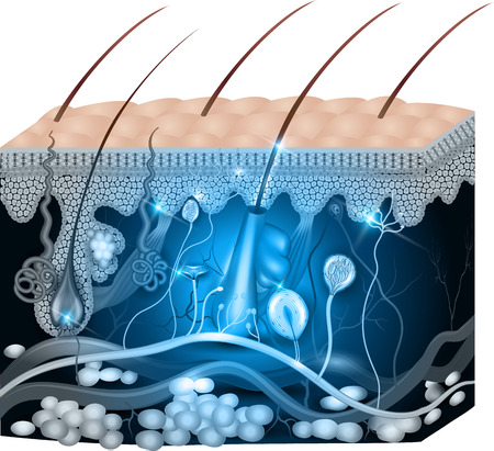 Skin anatomy abstract blue design. Detailed medical illustration.