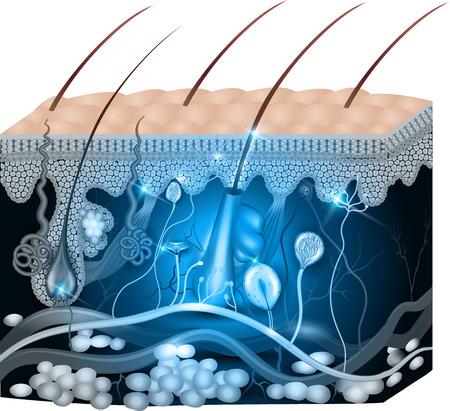l'anatomie de la peau de conception abstrait bleu. Illustration médicale détaillée. Illustration