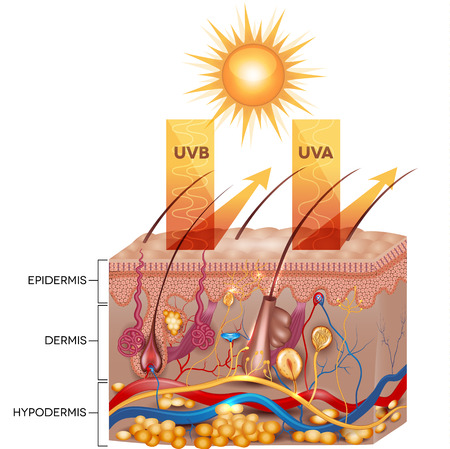 Protected skin with sunscreen lotion. UVB and UVA radiation can not penetrate into the skin. Vector