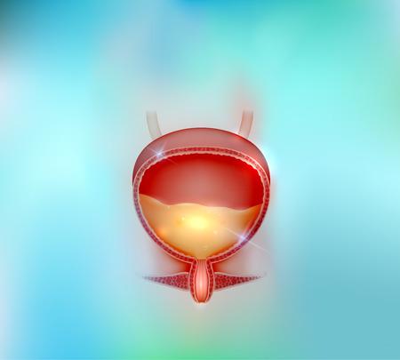 renal stone: Urinary bladder beautiful blue background