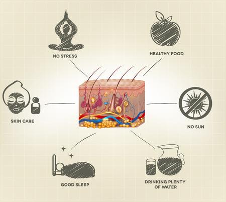 piel: Consejos de cuidado de la piel sana. Saludable Anatom�a de la piel realista y consejos dibujados a mano. Vectores