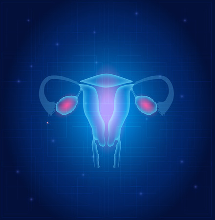 ovary: �tero y ovarios anatom�a fondo azul Vectores