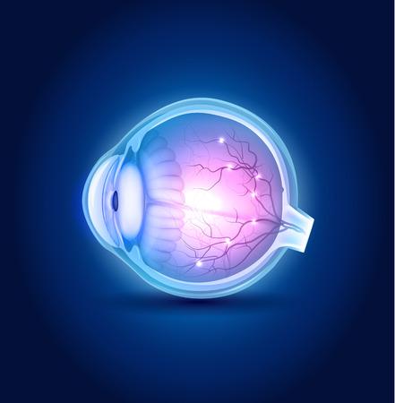 Eye anatomie blauw ontwerp, mooie heldere kleuren.