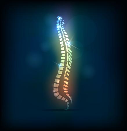 다채로운 척추 척추, 밝은 디자인 일러스트