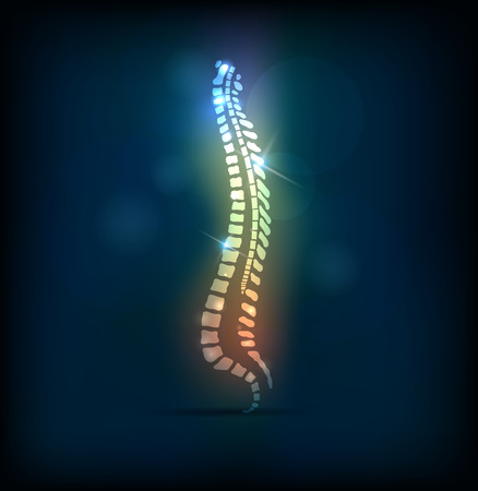 column: Colorful spine vertebral column, bright design