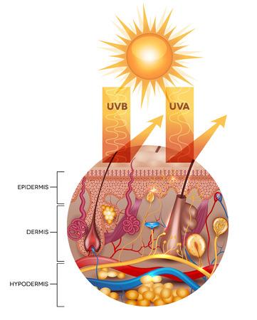 Piel protegida con protector solar, los rayos UVB y UVA no puede penetrar en la piel. La piel está protegido y saludable.