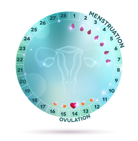 menstruation: Beautiful light blue menstrual cycle graphic wheel, reproductive system anatomy at the middle