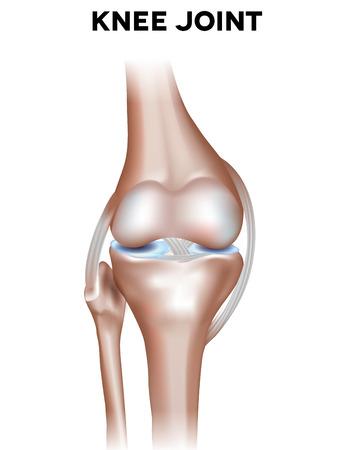 Normal knee joint anatomy. Healthy joint illustration. Stock Illustratie