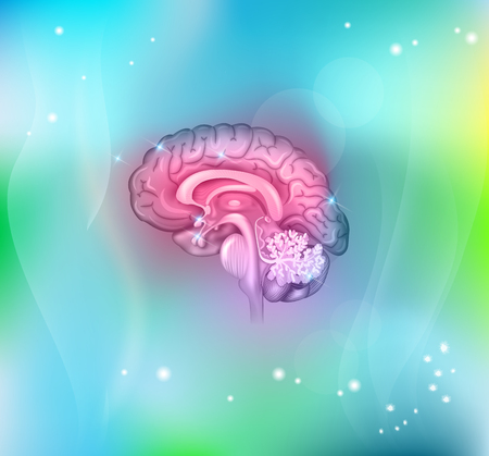 Human brain abstract light blue background, beautiful colorful illustration detailed anatomy. Sagittal view of the brain. Stock Illustratie