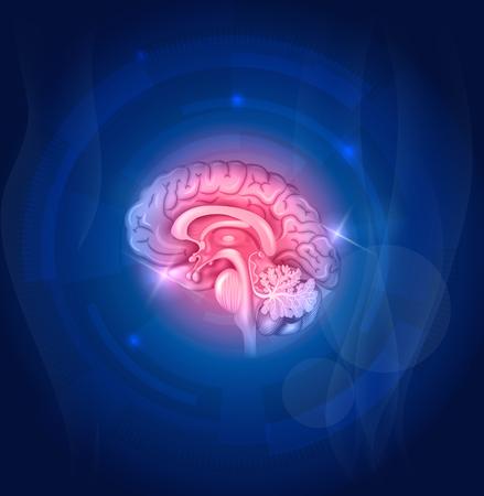 hypothalamus: Human brain on a blue background, beautiful bright design.