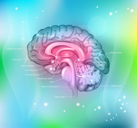 Human brain on a abstract light blue background, detailed colorful illustration.