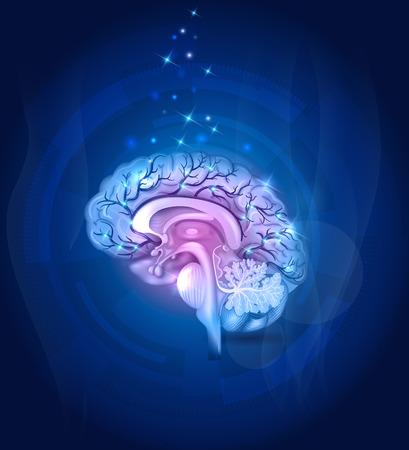クロス セクション、血管、詳細なイラスト青背景脳の健康。