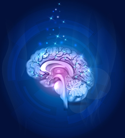 medical science: Healthy Brain cross section, vessels, detailed illustration abstract blue background.