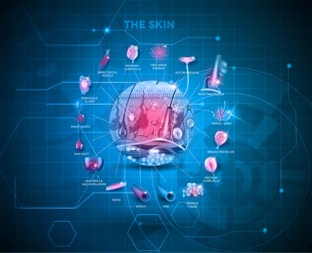 cell: Hautanatomie Struktur Hintergrund, detaillierte Darstellung Illustration