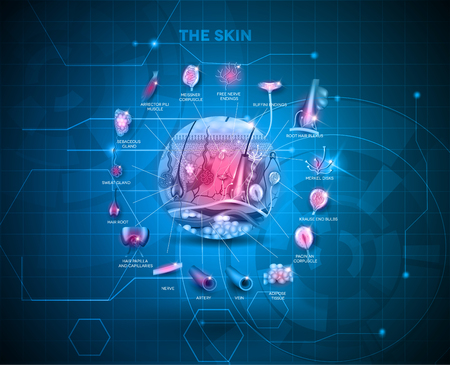blue hair: Skin anatomy structure background, detailed illustration