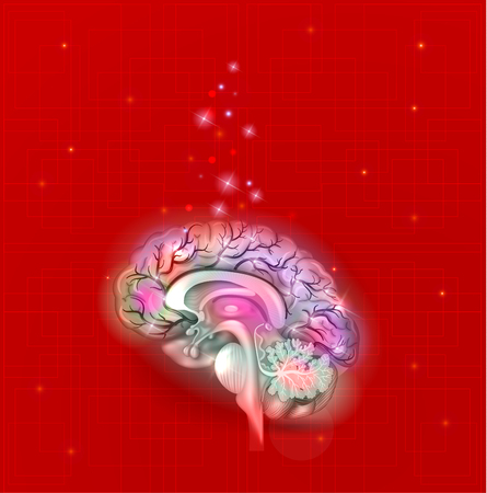 cerebral artery: Human brain on a bright red abstract background, detailed anatomy Illustration