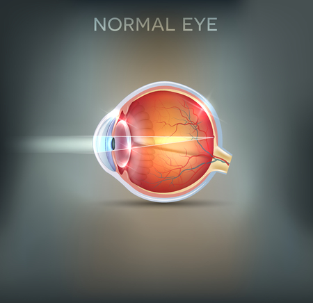 struktur: Ögat. Detaljerad anatomi, friska ögat illustrationen på en vacker mesh bakgrund.