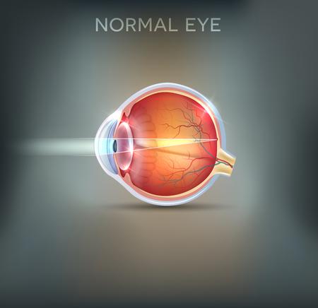 Het oog. Gedetailleerde anatomie, gezonde ogen illustratie op een mooie mesh achtergrond.
