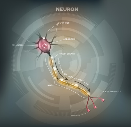 main part: Labeled diagram of the Neuron, nerve cell that is the main part of the nervous system. Abstract grey mesh background.