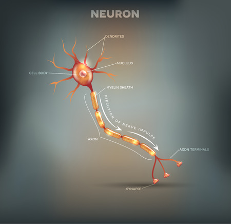dendrites: Neuron, nerve cell that is the main part of the nervous system, beautiful grey mesh background